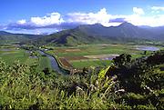Taro field, Hanalei, Kauai, Hawaii, USA<br />