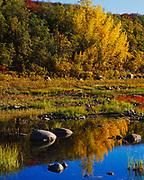 Balsam poplars reflected in pond along the Blackstone River, Tombstone Territorial Park, Yukon Territory, Canada.