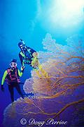 divers and sea fan, possibly <br /> Subergorgia mollis, <br /> Flinders Reef, Coral Sea, <br /> Australia  MR 205 MR 206