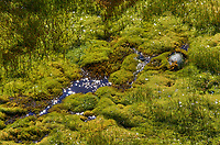 Moss and Grass in a Bog. Hike to Grytviken on South Georgia Island. Image taken with a Leica T camera and 18-56 mm lens (ISO 100, 56 mm, f/16, 1/100 sec). Raw image processed with Capture One Pro 8, Focus Magic, and Photoshop CC 2014.