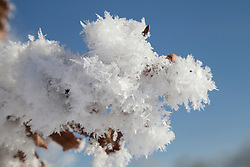 Close-up of ice crystals on a branch, Eichenau, F¸rstenfeldbruck, Bavaria, Germany