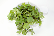 Cutout of fresh Coriander (Coriandrum sativum) leaves on white background