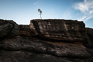A solitary tree grows on Nourlangie Rock, also called Burrunggui, an escarpment in Kakadu National Park in Australia's Northern Territory.<br /><br />(September 6, 2017)
