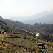 Tourists trekking with Black Hmong guides showing terraced fields near Sapa, Northern Vietnam. Sapa and the surrounding highlands is close to the Chinese border in Northern Vietnam and is inhabited by highland minorities including Hmong and Dzao groups. Sapa is now a thriving tourist destination for travelers taking the night train from Hanoi. Sapa, Vietnam. 16th March 2012. Photo Tim Clayton