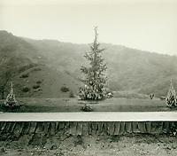 1921 Christmas tree at The Hollywood Bowl