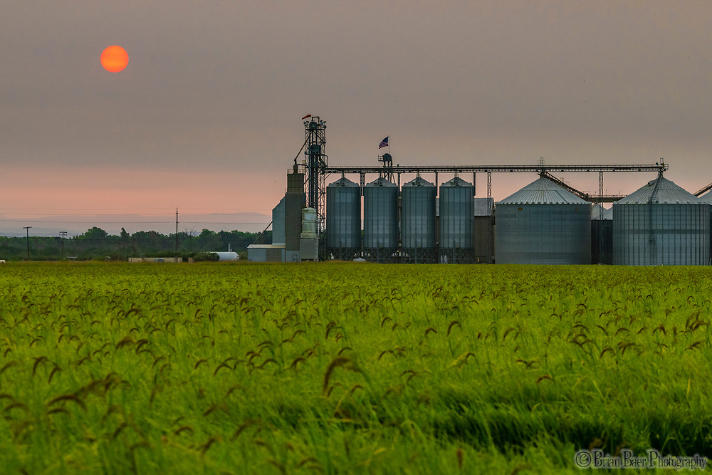 Montna Farm, Thursday, August 12, 2021.<br /> Photo Brian Baer