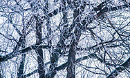 Winter frost in the trees of Regina, Saskatchewan More about this set of images on the blog: https://goo.gl/bY9UZ3