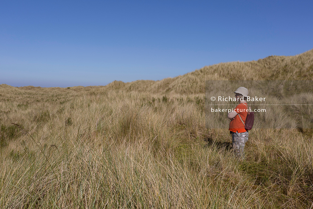 A solitary walker in the western dunes on Holy Island, on 27th June 2019, on Lindisfarne Island, Northumberland, England. The Holy Island of Lindisfarne, also known simply as Holy Island, is an island off the northeast coast of England. Holy Island has a recorded history from the 6th century AD; it was an important centre of Celtic and Anglo-saxon Christianity. After the Viking invasions and the Norman conquest of England, a priory was reestablished.
