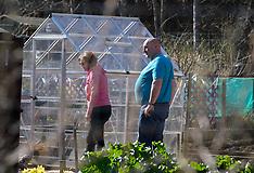 Gardeners tend their allotments, Livingston, 7 April 2020