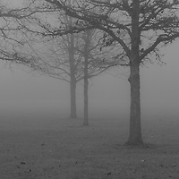 """""""Into the Beyond"""" B&W <br /> <br /> Beautiful fog covered landscape!! Trees surrounded in fog as thick as pea soup!!<br /> <br /> All about Fog by Rachel Cohen"""