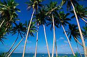 Melekeok, Babeldaoh,Palau, Micronesia<br />