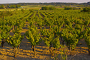 Vineyards, South of France, Congenies