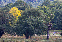 © Licensed to London News Pictures. 05/10/2020. London, UK. Walkers enjoy the mild temperatures and autumnal colours in Richmond Park today after Storm Alex lashed the UK with 3 days of rain. Weather forecasters predict sunshine and showers with a high of 16c for the rest of the week. Photo credit: Alex Lentati/LNP