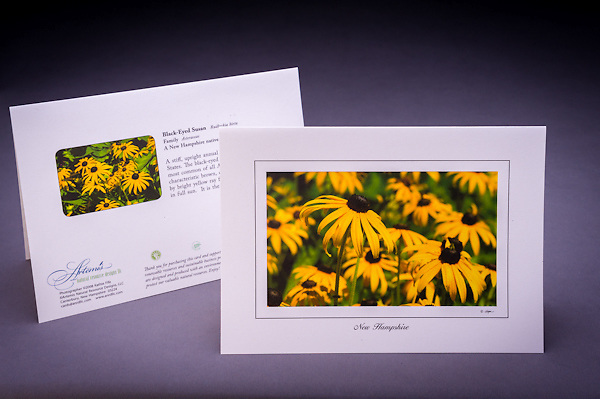 A sure sign of late summer - the gorgeous display of the native wildflower, the black eyed susan,  growing in fields and along the roadsides of NH. <br /> <br /> Artemis Photo Greeting Cards featuring NH native flora and fauna and historic sites. The cards are made exclusively in NH made from 100% FSC recycled paper, manufactured with wind and water power, and are archival acid free paper. Each card includes details on the back about the image, including interesting anecdotes, historic facts, conservation status, and recipes.