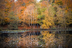 © Licensed to London News Pictures. 22/10/2020. Burnham, UK. Reflections in a pond as a man walks through autumnal colours at Burnham Beeches national park and National Nature Reserve in Buckinghamshire, south East England. Photo credit: Ben Cawthra/LNP