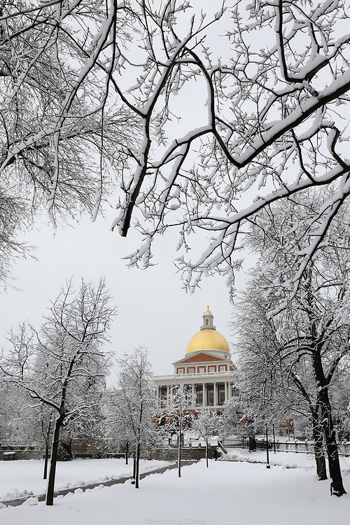 The snow covered trees of Boston Common in front of the Massachusetts State House.