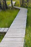 A boardwalk in a wetland near Glenorchy, New Zealand.