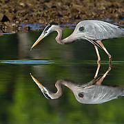 Shore Birds and Wading Birds