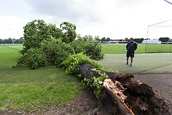 © licensed to London News Pictures. London, UK 17/06/2012. A man looking at the fallen tree which injured three boys all, aged nine, at Spencer Cricket Ground in Earlsfield, south-west London. Photo credit: Tolga Akmen/LNP