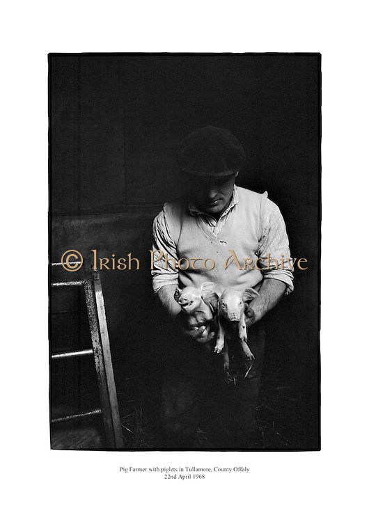 Pig farmer with piglets in Tullamore, County Offaly.<br /> <br /> 22nd April 1968<br /> 22/04/1968