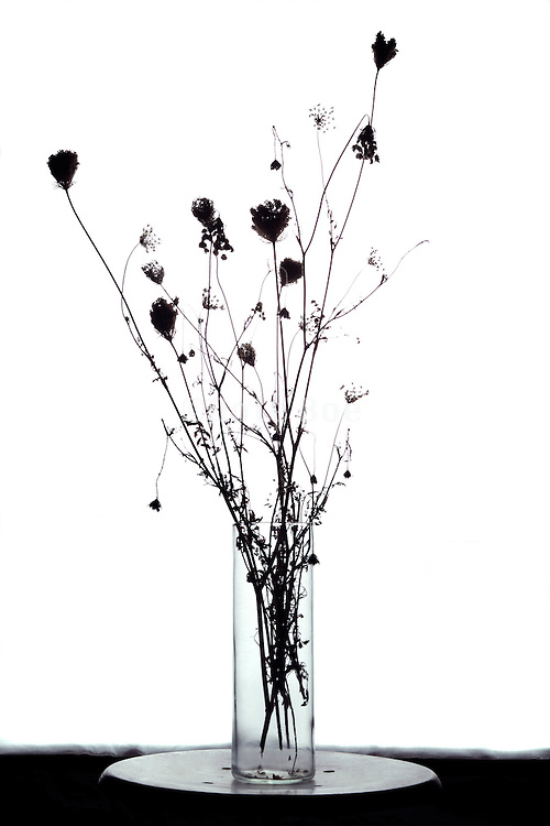 silhouette of wilted wild flower bouquet