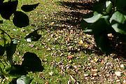 Autumn peek