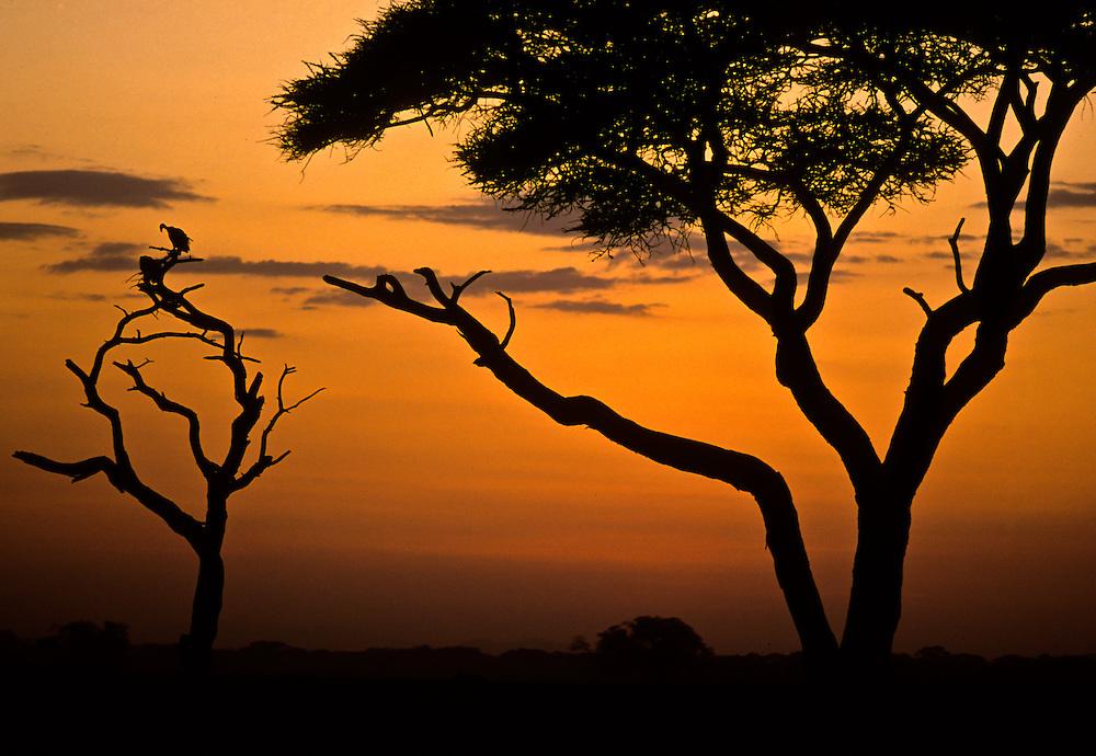 Amboseli Park in Kenya at sunset.