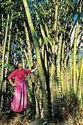 Trekker beside giant Bamboo, near Kangchnjunga, eastern Nepal
