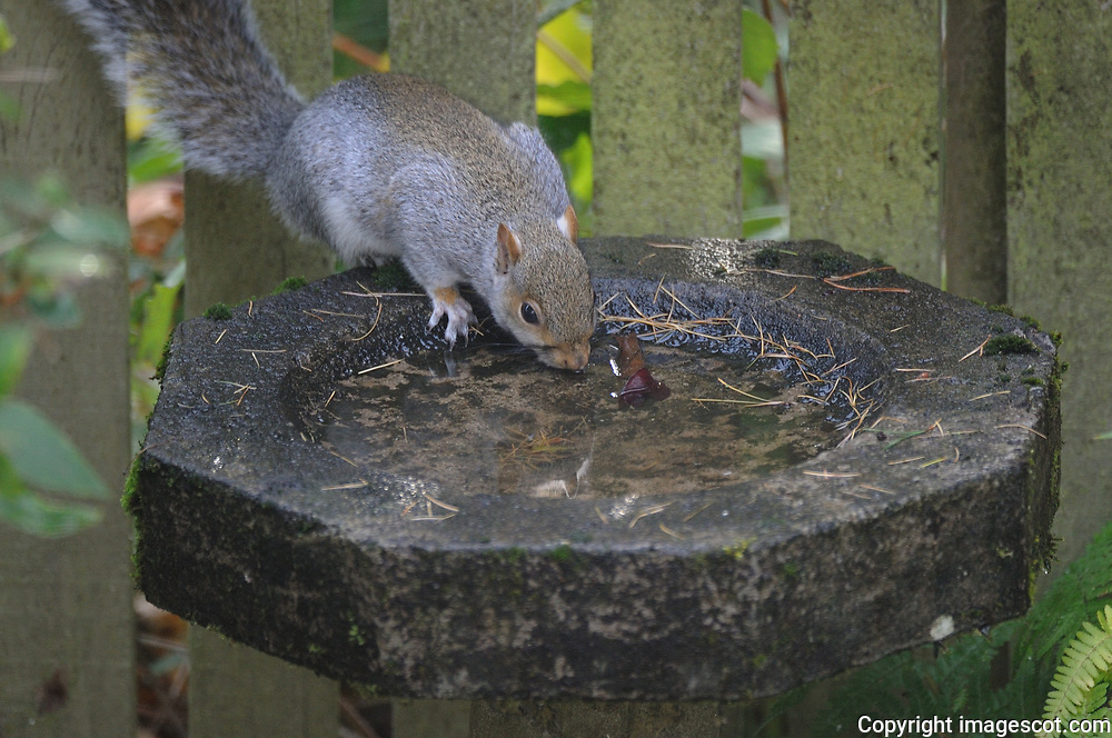 Grey squirrel drink<br /> *ADD TO CART FOR LICENSING OPTIONS*