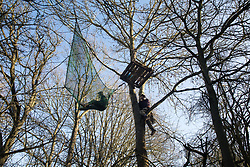 Harefield, UK. 19 January, 2020. Activists climb a tree at the Colne Valley wildlife protection camp. Activists from Extinction Rebellion, Stop HS2 and Save the Colne Valley attending a 'Stand for the Trees' event timed to coincide with tree felling work for HS2 have retaken the camp from which a small group of Save the Colne Valley activists had been evicted by bailiffs acting on behalf of HS2 over the previous week and a half. 108 ancient woodlands are set to be destroyed by the high-speed rail link.