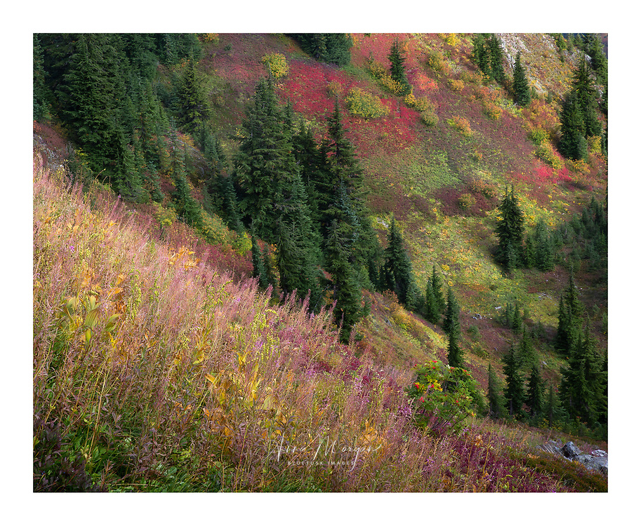 colourful hillside in autumn with red leaves of blueberry and huckleberry and a small mountain ash