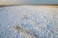 Mineral deposits on dry lakebed of Harney Lake, Malheur National Wildlife Refuge, Oregon