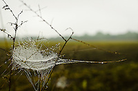 A spider's web at the edge of a recently plowed field in preparation for the corn planting.