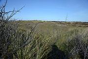 Texel is het grootste Nederlandse Waddeneiland. Het landschap op Texel is rijk en divers. Texel heeft behalve polders, brede zandstranden, duinen en graslanden ook heide, bos en kwelders. <br /> <br /> Texel is the biggest Dutch Wadden Island. The landscape on the island is rich and diverse. Texel has besides polders, wide sandy beaches, dunes and grasslands also heaths, woods and marshes.<br /> <br /> Op de foto / On the photo:  Duien bij De Koog / Dunes Near De Koog