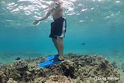 snorkeler standing on coral at Kahalu'u Beach, Kahaluu Beach Park, Kona, Hawaii ( the Big Island ), Hawaiian Islands, U.S.A. ( Central Pacific Ocean )