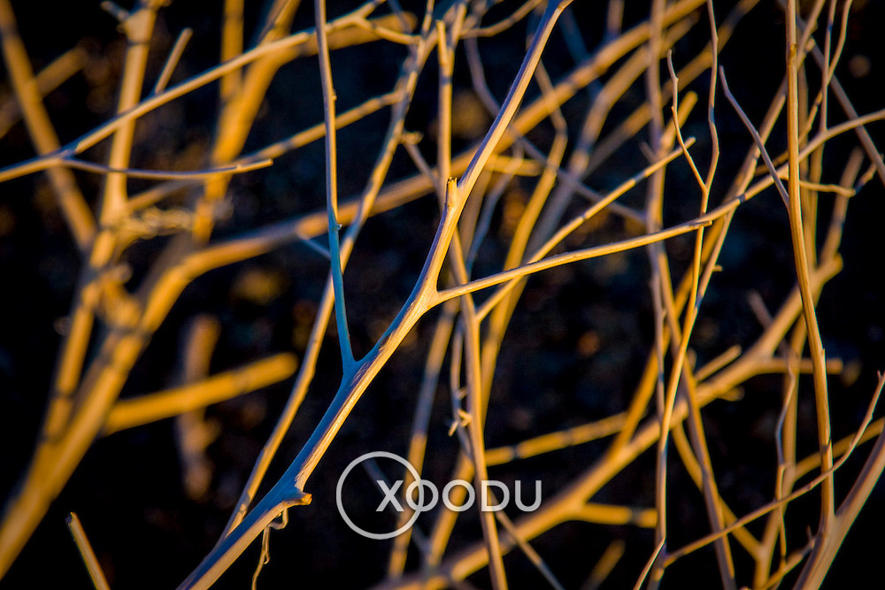 Tree branch macro closeup (, Mongolia - Sep. 2008) (Image ID: 080905-1917582a)