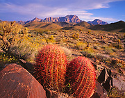 Barrel Cactus and theProvidence Mountains at Sunset,Mojave National Preserve, California