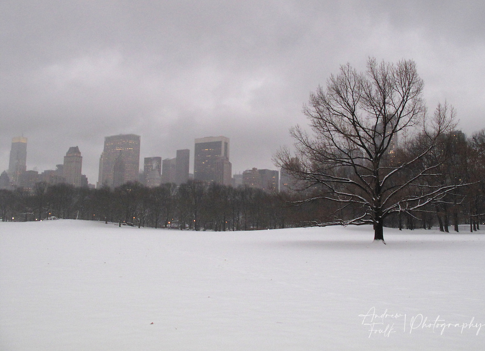 A lone tree sits surrounded by a blanket of white in Central Park, New York, NY.
