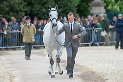 Dzenis Harry, (GBR), Xam<br /> First Horse Inspection - Mitsubishi Motors Badminton Horse Trials <br /> Badminton 2015