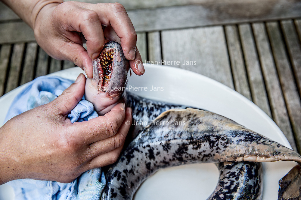 """Nederland, Amsterdam, 15 september 2016.<br /> Chef-kok Henri Roquas bereidt  de zo genaamde zeeprik.<br /> In een notendop: de zeeprik is een zeldzaam dier, waarvan de meeste Nederlanders amper weten dat hij in onze rivieren rondzwemt. Chef-kok Henri Roquas wil meer aandacht vestigen op dit 'levende fossiel', en richtte daarvoor het 'Zeeprikgenootschap' op. Die promoot de zeeprik.<br /> Roquas is chef, en bereidt regelmatig een zeeprik of ander 'fossiel' om die in Nederland op de kaart te zetten.<br /> <br /> Netherlands, Amsterdam, September 15, 2016.<br /> <br /> Chef Henri Roquas prepares sea lamprey. In a nutshell: the sea lamprey is a rare animal and most Dutch people hardly know it swims around in our rivers. Henri Roquas wants to draw more attention to this """"living fossil"""", and set up the 'sea lamprey society' to promote this unique fish.<br /> <br /> Foto: Jean-Pierre Jans"""