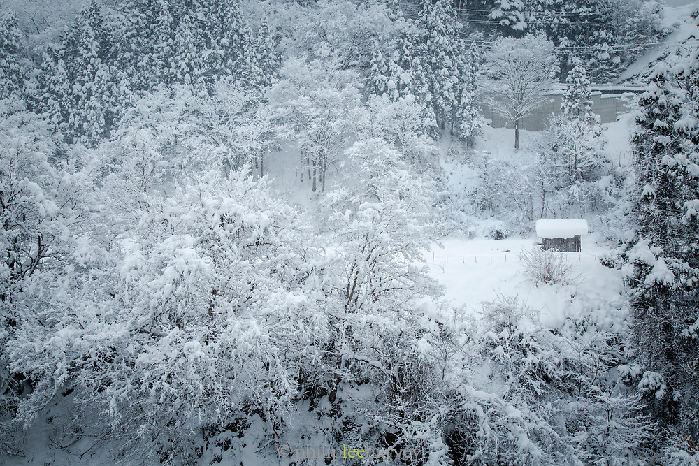 Scenic winter landscape with covered in snow forest captured from high angle, Shirakawa-go, Japan