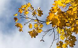 THEMENBILD - herbstlich gefärbte Blätter an einem sonnigen Herbsttag, aufgenommen am 23. Oktober 2015, Innsbruck, Österreich // autumnal colored leaves on a sunny Autumn Day, Innsbruck, Austria on 2015/10/23. EXPA Pictures © 2015, PhotoCredit: EXPA/ Jakob Gruber