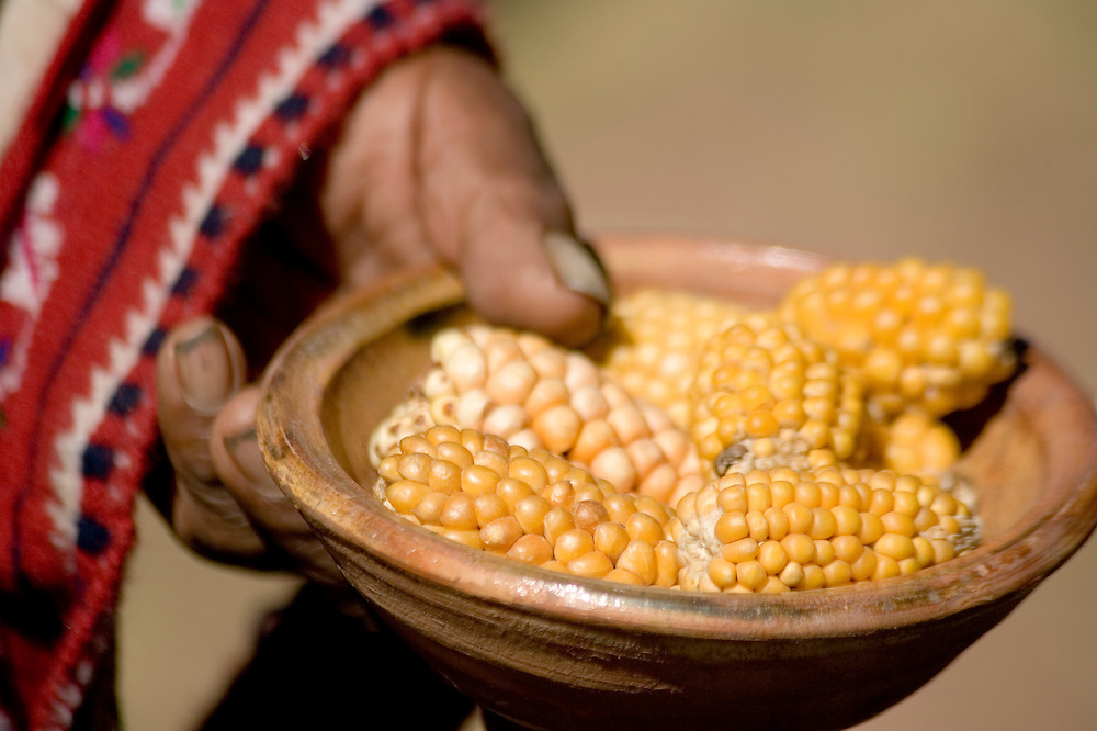 Bowl of corn on cobs, Taquile Island (also known as Isla Taquile), Lake Titicaca, Peru, South America