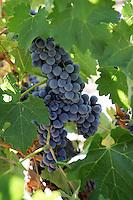 10 September 2006:  Wilson Creek Winery in Temecula Valley, CA.