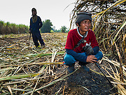 02 FEBRUARY 2016 - THUNG KHOK, SUBPAN BURI, THAILAND:  Migrant farm worker from eastern Thailand rest in a sugar cane field during the harvest in Suphan Buri province, in western Thailand. Thai sugar cane yields are expected to drop by about two percent for the 2015/2016 harvest because of below normal rainfall. The size of the crop is expected to increase slightly though because farmers planted more sugar cane acreage this year. Thailand is the second leading exporter of sugar in the world. Thai sugar growers are hoping a good crop would make up for shortages in global markets caused by lower harvests in Brazil and Australia, where sugar yields have been stunted by drought. Because of the drought in Thailand, sugar exports are expected to drop by up to 20 percent, contributing to a global sugar shortage. The drought is is also hurting the quality of Thai sugar, because sugarcane grown in drought is less sweet than normal so mills need to process more cane to make the same amount of sugar. Thai sugar farmers have lost 20 percent to 30 percent of their output this year because of the drought.      PHOTO BY JACK KURTZ