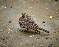 Sick Bird. Image taken with a Leica SL2 camera and Sigma 100-400 mm lens