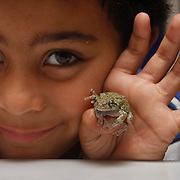 07/09/2015,MA: George Iker Richardson, 6, proudly shows a Grey Treefrong at his home in Bradford-Haverhill <br /> <br /> The Grey Treefrong is a master of camouflage, according Mass Audubon. <br /> Their gray-brown frog blends in with the tree bark on which it perches. Its call, heard from spring through summer, is a short, high-pitched trill