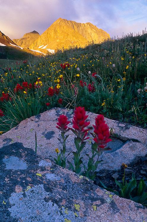 Morning light, Indian paintbrush wildflowers, August, Thunder Pass, Rocky Mountain National Park, Colorado, USA