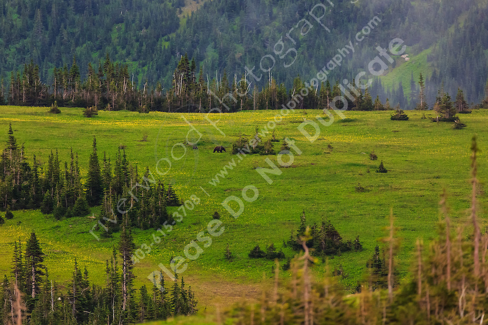 Landscape photography along the Going-to-the-Sun road through Logan Pass in Glacier National Park<br /> <br /> ©2016, Sean Phillips<br /> http://www.RiverwoodPhotography.com