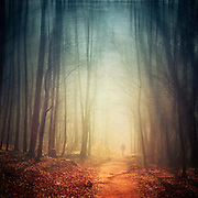 Man walking through a hazy forest on a spring morning.<br /> Texturized photograph.